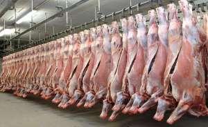(Halal) Fresh Frozen Bone-in and Boneless Beef